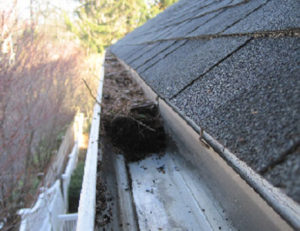 auckland roof services